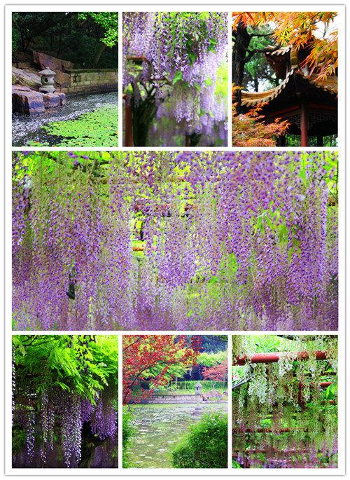 紫藤园7in1s.jpg