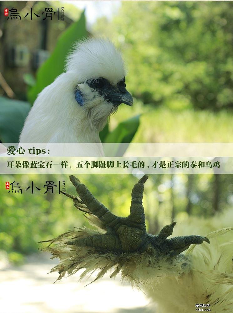 保护区6_副本_副本.jpg