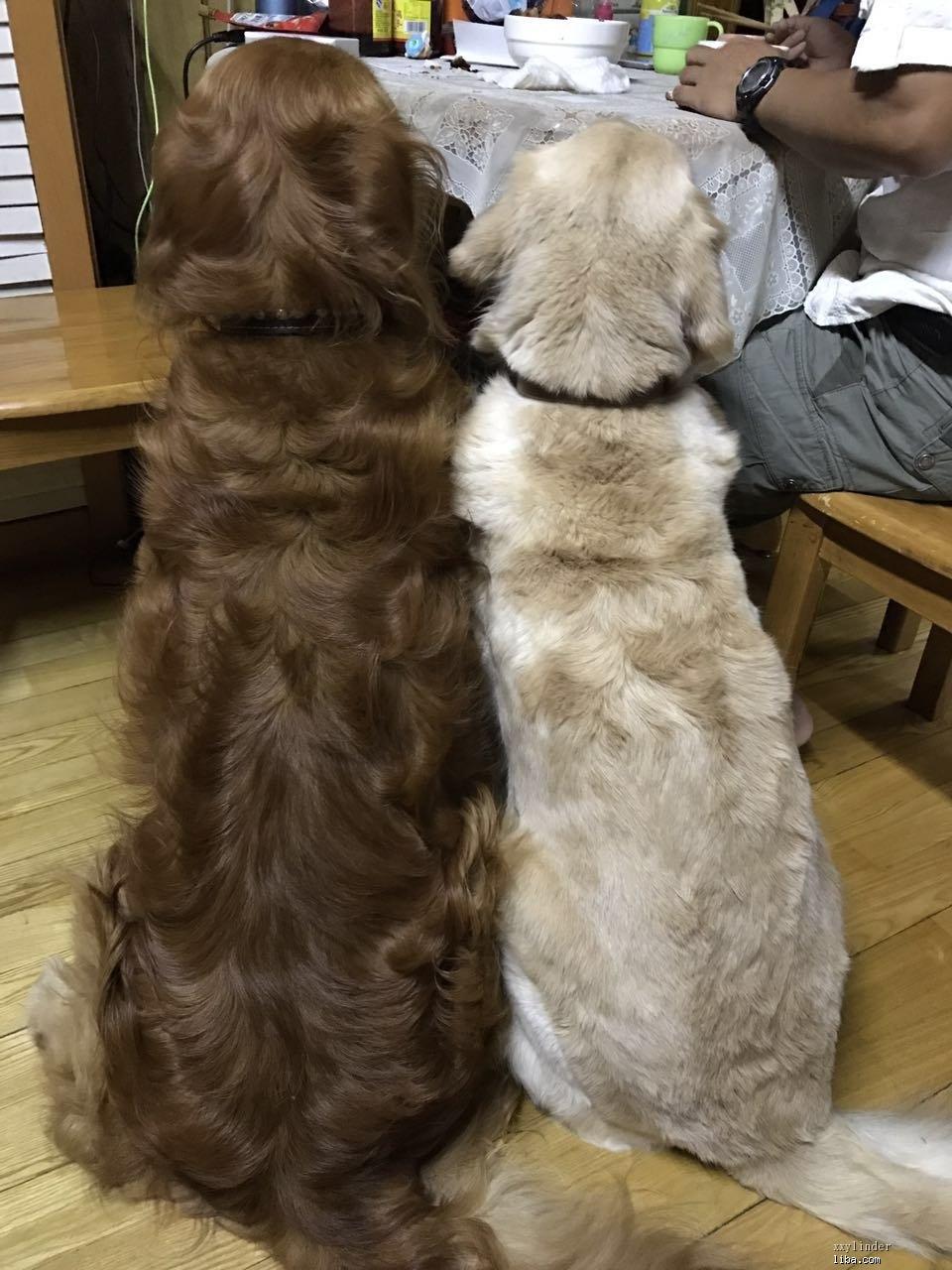 两狗狗背影.jpg
