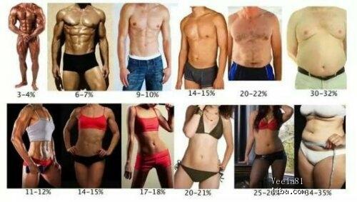 体 脂肪 率 水分