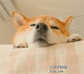 狗狗01.jpg