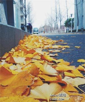 树叶01.jpg