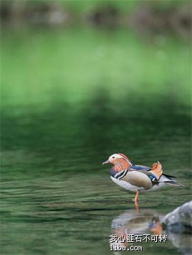 鸟01.jpg