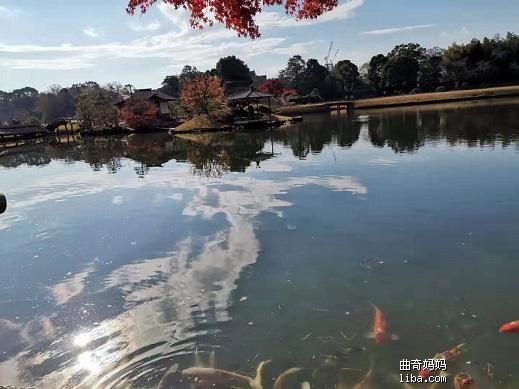 后乐园的鲤鱼.jpg
